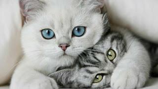 Gatto!!! Gray *_* come resistere a due occhioni di micio!