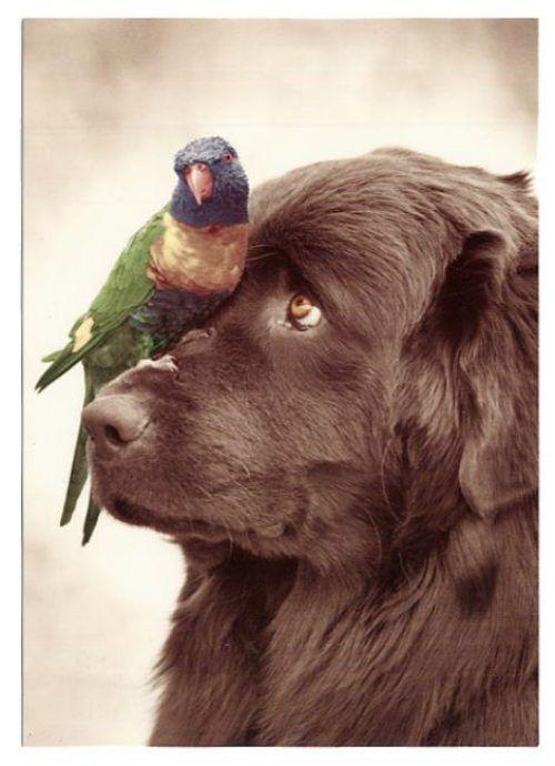 Animali e Persone ~ Buona Domenica amici degli animali (oltre che delle persone)!